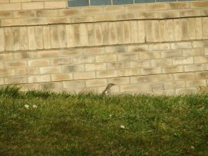 ..cause I like ... Birds :)